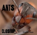 Close Up: Ants