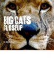 Close Up: Big Cats
